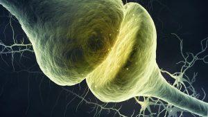 sinapsa