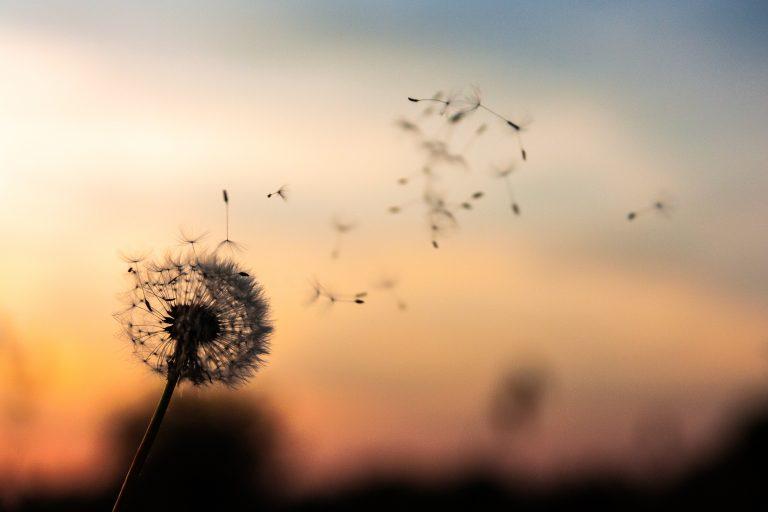 Mindfulness: meditația concentrată pe respirație