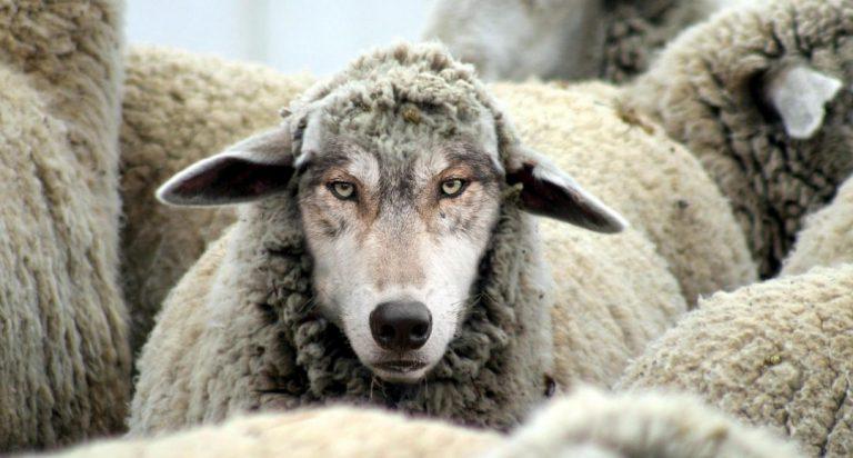 Lupul în blană de oaie sau agresivitatea mascată (1)